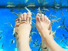 Fish spa pedicure massage treatment of feet - stock photo