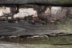 Beautiful wood texture - stock photo