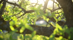 Natural rural spring or summer background. Stock Footage