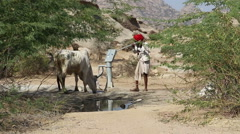 Man drawing water from pumping station for a thirsty cow at field in Jodhpur. Stock Footage
