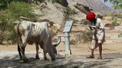 Man drawing water from pumping station for a thirsty cow at field in Jodhpur. - stock footage