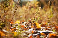 Autumn forest - fallen leaves, bright sun, dried grass. Natural autumn backgr - stock photo