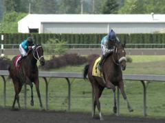 Horse Race, Horses, Racing, Track, Race Track Stock Footage