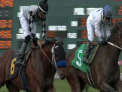 Horse Race, Horses, Racing, Track, Race Track - stock footage