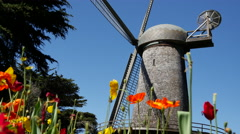 Dutch Windmill with Tulips at the Golden Gate Park in San Francisco Stock Footage