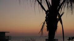 Miami Beach Sunrise Palm Tree - stock footage