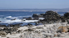 Rocky Beach with People at Pacific Grove Point Pinos Stock Footage