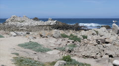 Rocky Beach at Pacific Grove Point Pinos Stock Footage