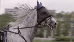 Closeup of head grey color horses running in the race,slowmotion Stock Footage