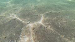 Beach Floor Underwater - stock footage