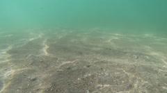 Beach Floor Background - stock footage