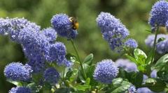 Bee pollinating garden plants Stock Footage