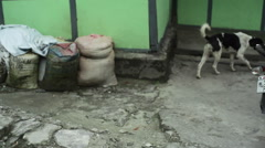 Skinny street dog in India, medium shot - stock footage