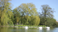Stock Video Footage of lovely trees and river  ,and flowers background
