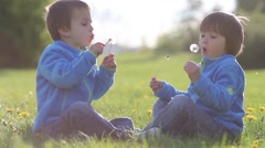 Happy cute caucasian boys, brothers, blowing dandelion outdoors in spring par - stock footage