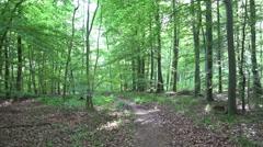 4k Sunny woodrush beech forest spring season panning Stock Footage