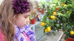 Little girl standing next to tree citrus cumquat in the greenhouse Stock Footage