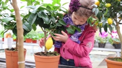 Little girl in a pink jacket touch citrus fruit at greenhouse Stock Footage