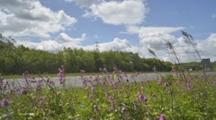 Time lapse traffic passing wild flowers on A64 near Leeds Yorkshire UK Stock Footage