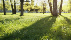 Low angle show in park with long shadows, prores footage Stock Footage