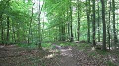 Sunny woodrush beech forest spring season panning Stock Footage