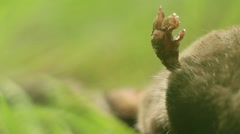 Close-up paw rodent Stock Footage