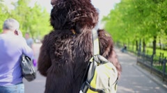 Actor dressed as bear walks along alley in park, rear view. Stock Footage