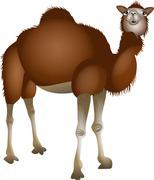Cartoon Desert Camel - stock illustration