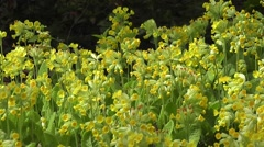 Nature Flowers Life Stock Footage