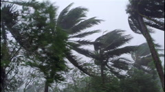 Hurricane Conditions palm trees sway Stock Footage