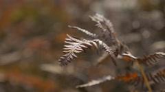 Shallow DOF Cyatheales tree fern  swinging  on wind 4K 2160p UHD panning foot Stock Footage