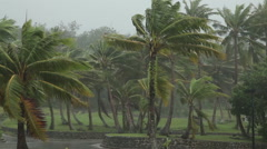 Palm trees in a hurricane Stock Footage