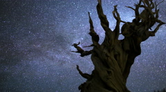 4K 3 Axis Motion Control Astro Time Lapse of Milkyway & Bristlecone Pine -Pan R- Stock Footage