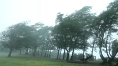 hurricane wind blows through trees - stock footage