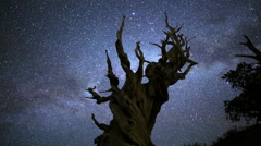 4K 3 Axis Motion Control Astro Time Lapse of Milkyway & Bristlecone Pine Zoom In Stock Footage