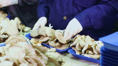 Workers weighing mushrooms on scales Stock Footage
