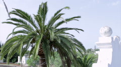 Palm Tree Cleaning Time Lapse Stock Footage