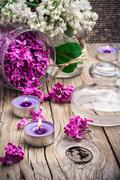Branches of lilac Stock Photos