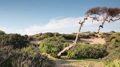 morocco coast atlantic beach scenic tree - stock footage