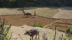 Farming with Water Buffalo Stock Footage