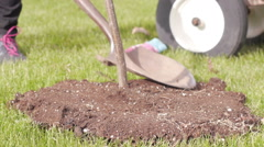 Planting tree Stock Footage