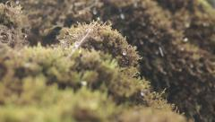 Crystal drops of water dripping on the moss Stock Footage
