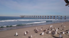 Feeding seagulls on the Hermosa beach in California, USA Stock Footage