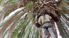 Palm Tree Cleaning Still Stock Footage
