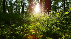 morning in the forest - stock footage