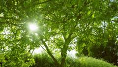 Timelapse of a sunset behind a tree - evening sun filtering - stock footage
