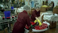The line for the production of cooking. Preserving berries. A conveyor belt. Stock Footage