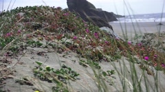 Oregon coastline, Canon Beach dunes Stock Footage
