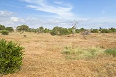 Stock Photo of Dry savanna landscape in Tsavo East National Park in Kenya.