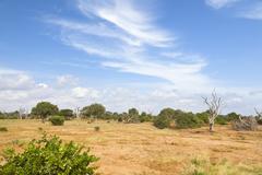 Dry savanna landscape in Tsavo East National Park in Kenya. Stock Photos
